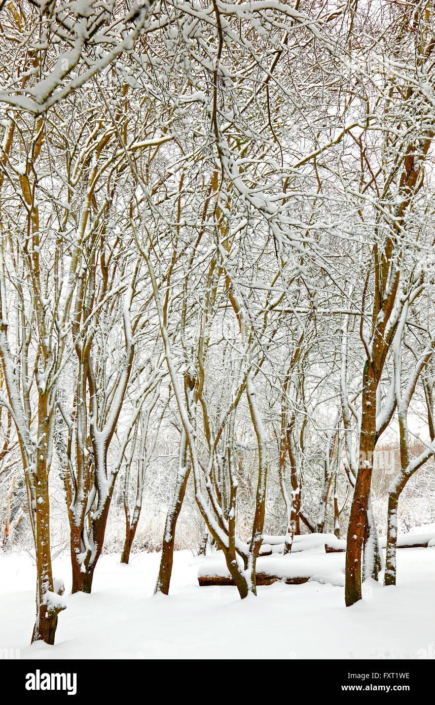 winter-woodland-digitally-altered-increa