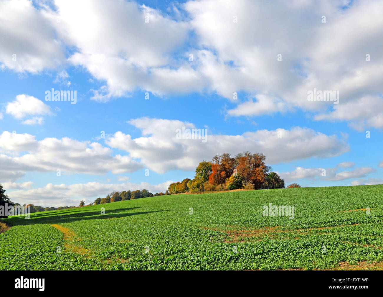 trees-on-hilltop-in-autumn-berkshire-eng