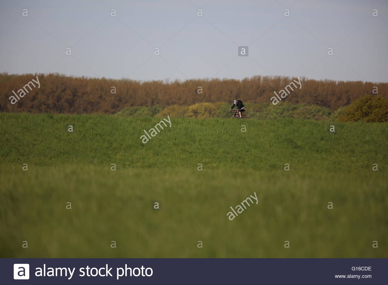 bicyclist-in-meadow-with-foresst-in-back