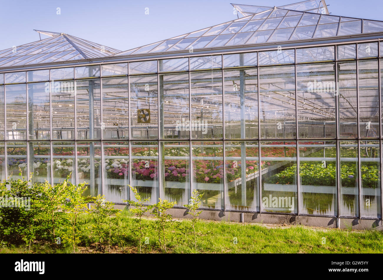 Industrial greenhouse with colourful flowers in the Netherlands Stock Photo