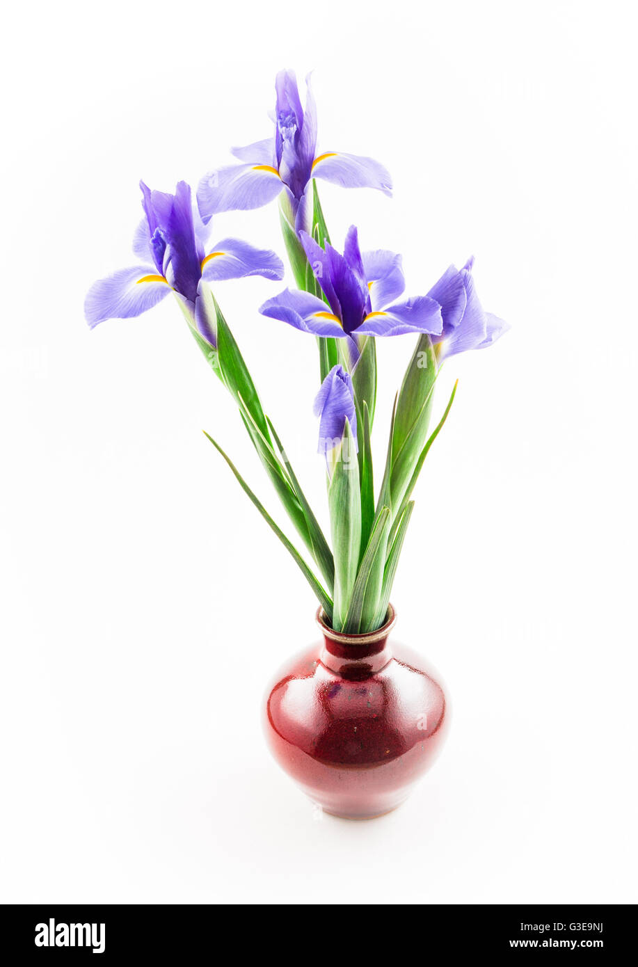 Blue Iris, Red Vase Stock Photo