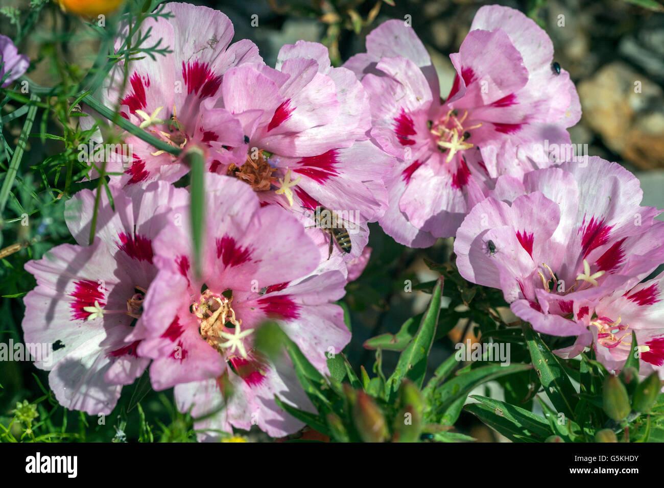 meadow-flowers-G5KHDY.jpg