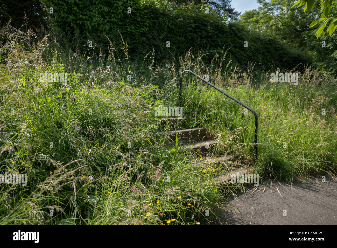 how to clear overgrown grass