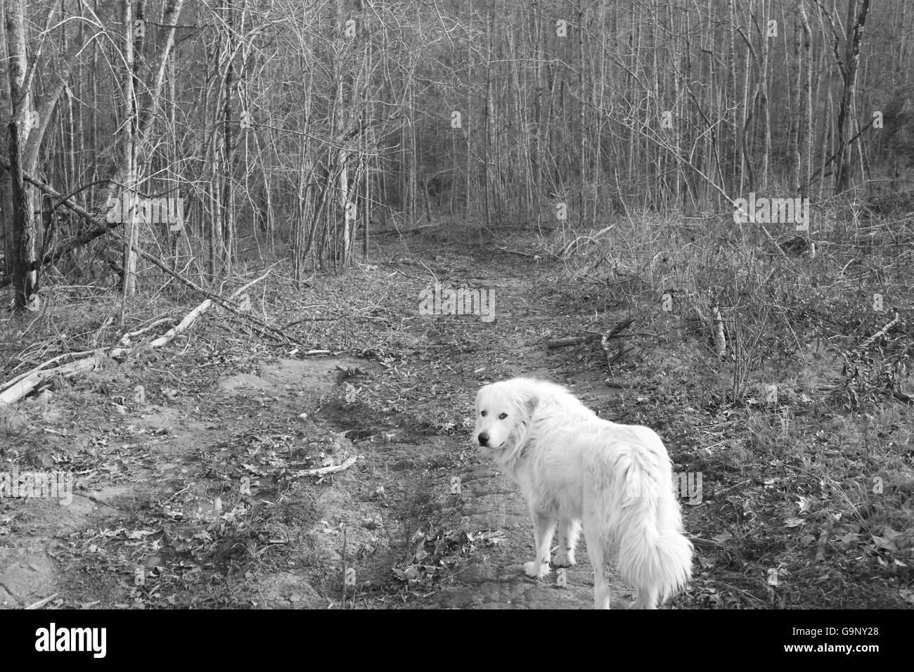 sad-dog-G9NY28.jpg
