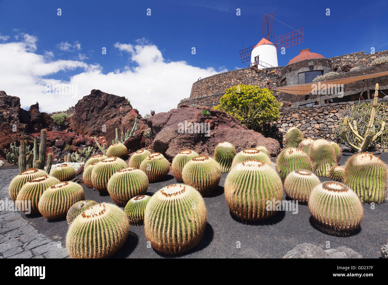 Cactus garden jardin de cactus by cesar manrique wind mill unesco stock photo royalty free - Jardin de cactus ...