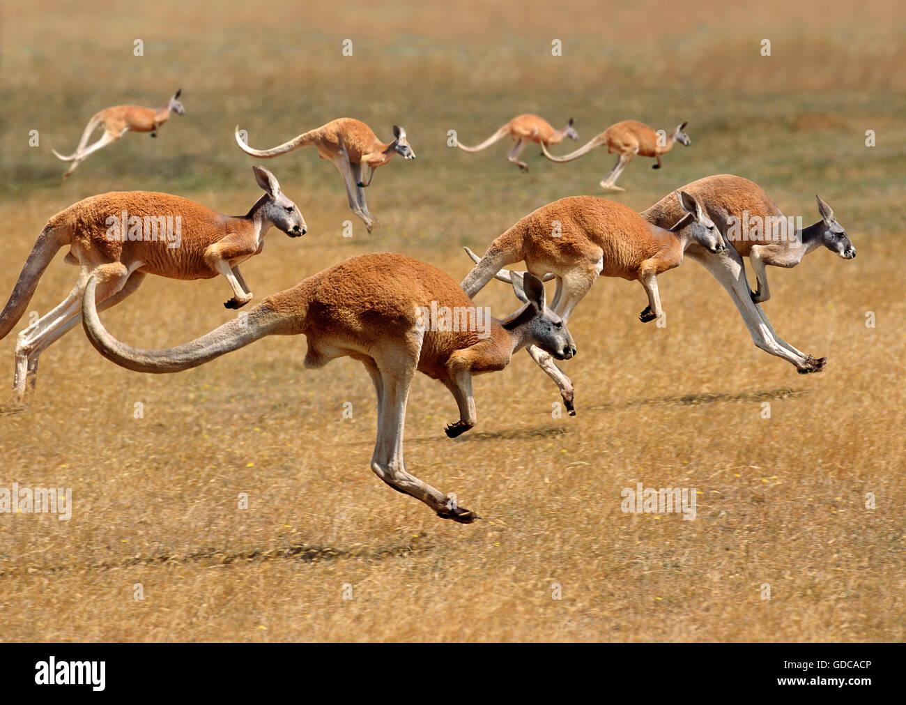 Free online group sex in Australia