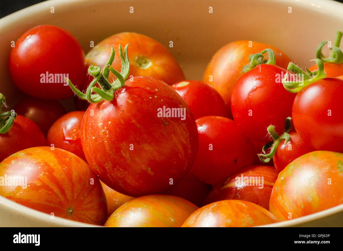 a-close-up-of-home-grown-tomatoes-freshly-picked-from-the-garden-GPJ63P.jpg