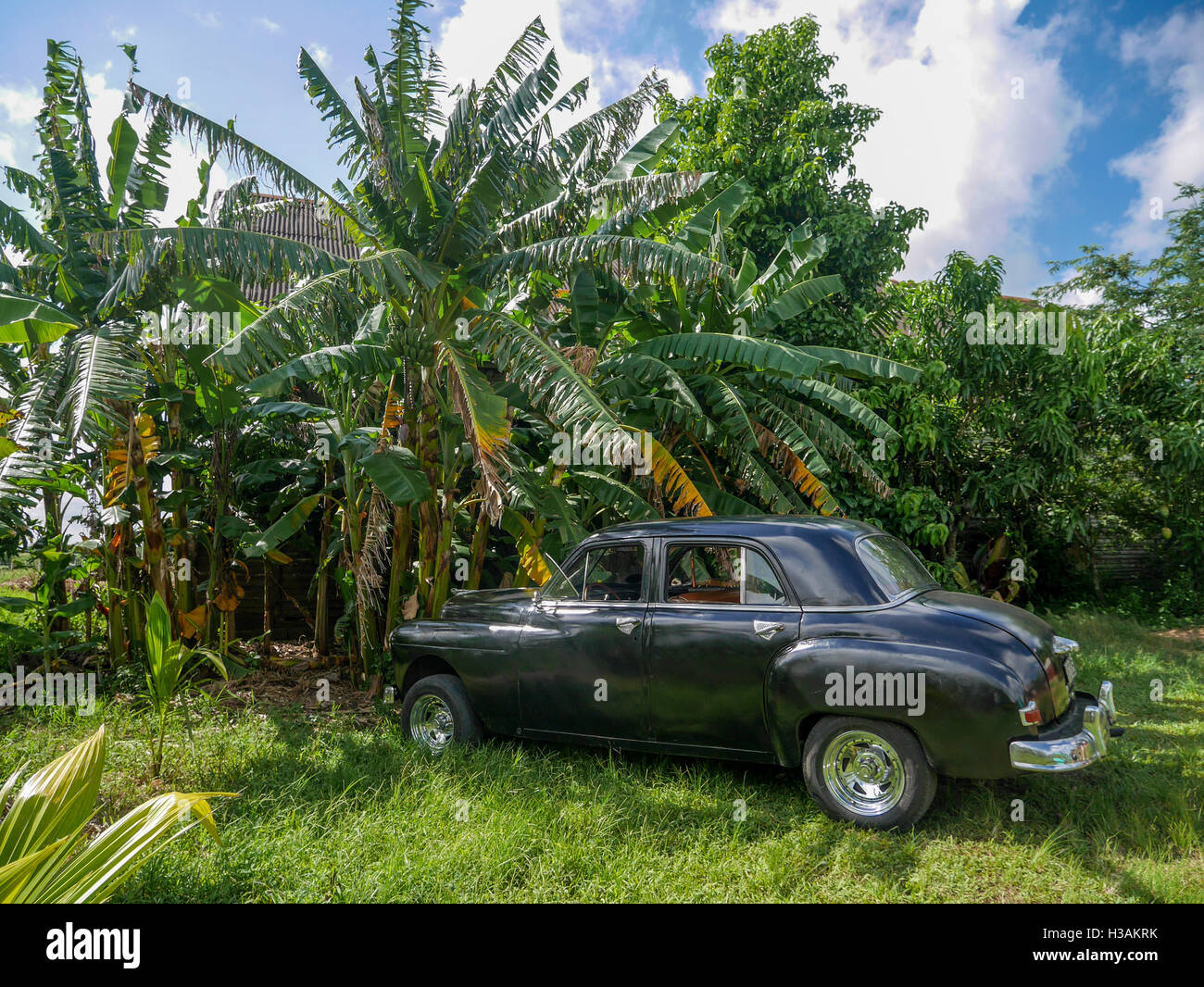 Cuba Air Bnb Black Old American Car From 50s 60s Parked In Banana
