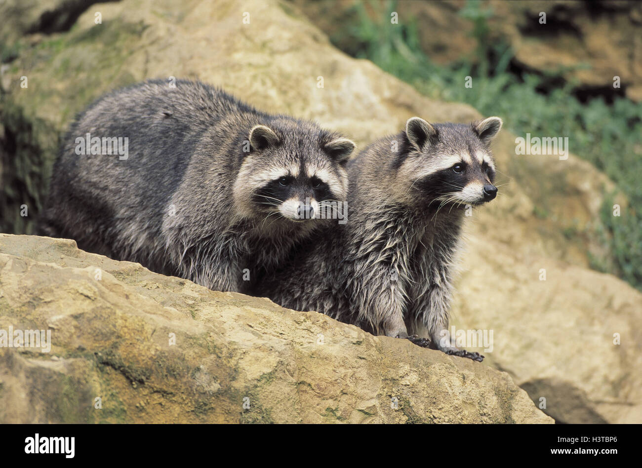 small wild animals wallpapers - photo #36