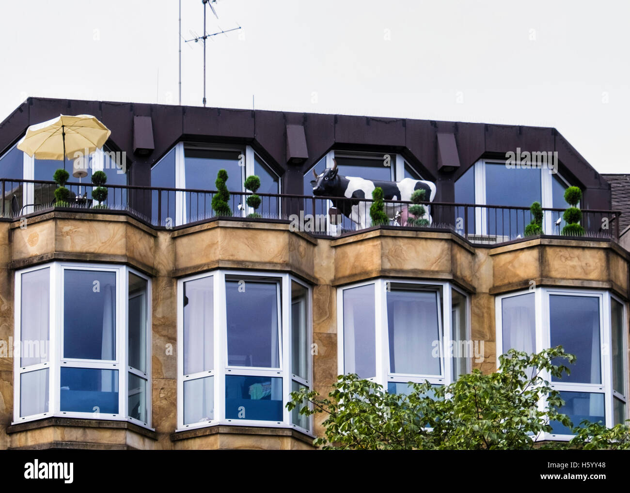 cow-on-an-apartment-balcony-quirky-amusi