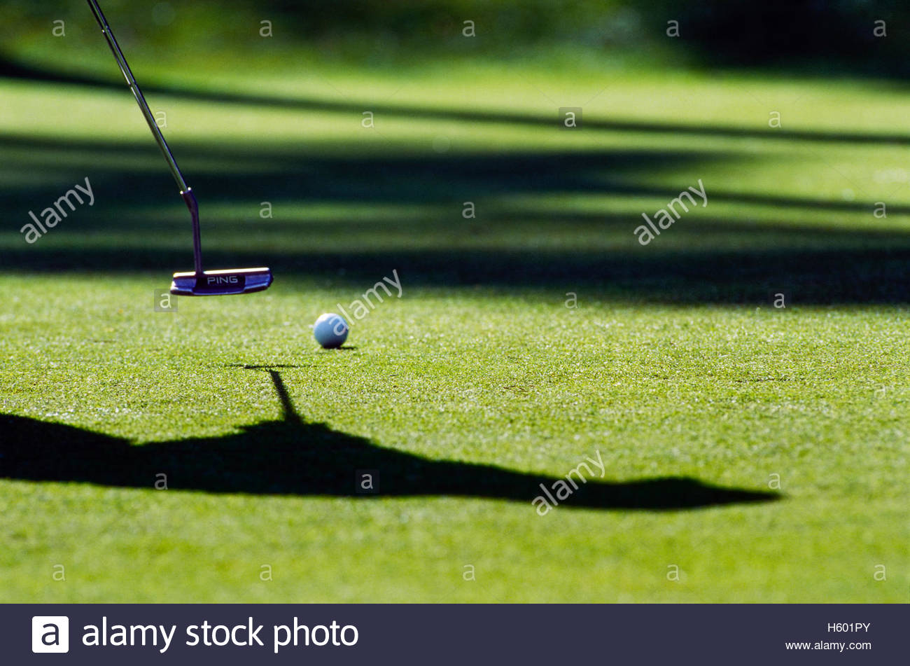 Golfer putting amongst shadows. Stock Foto