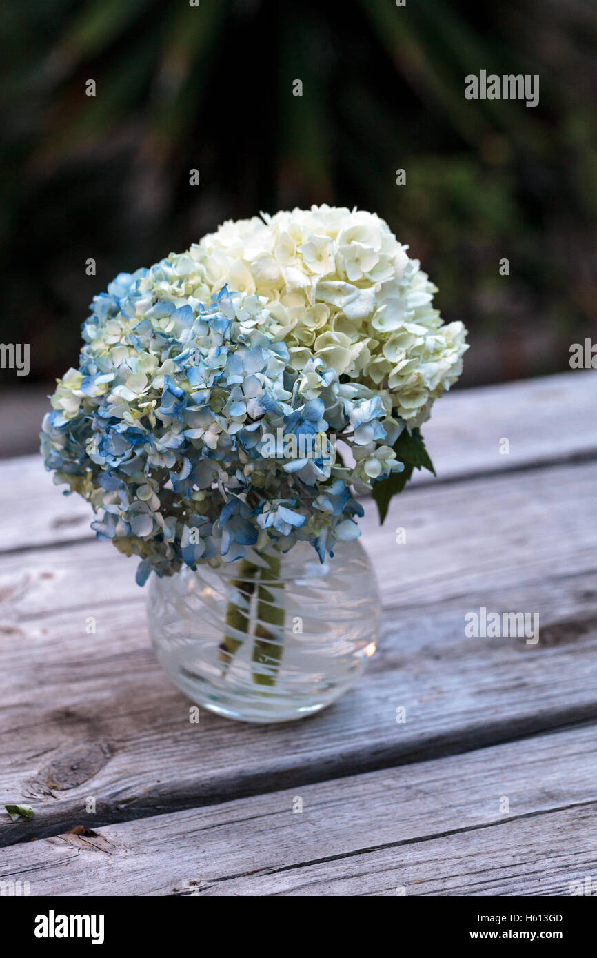 white and blue hydrangea flowers in a glass vase on a rustic wood stock photo 124185277 alamy. Black Bedroom Furniture Sets. Home Design Ideas