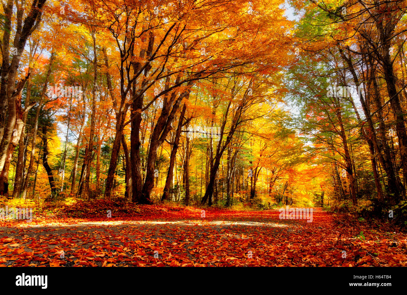 a-country-road-in-autumn-in-quebec-H64TB4.jpg