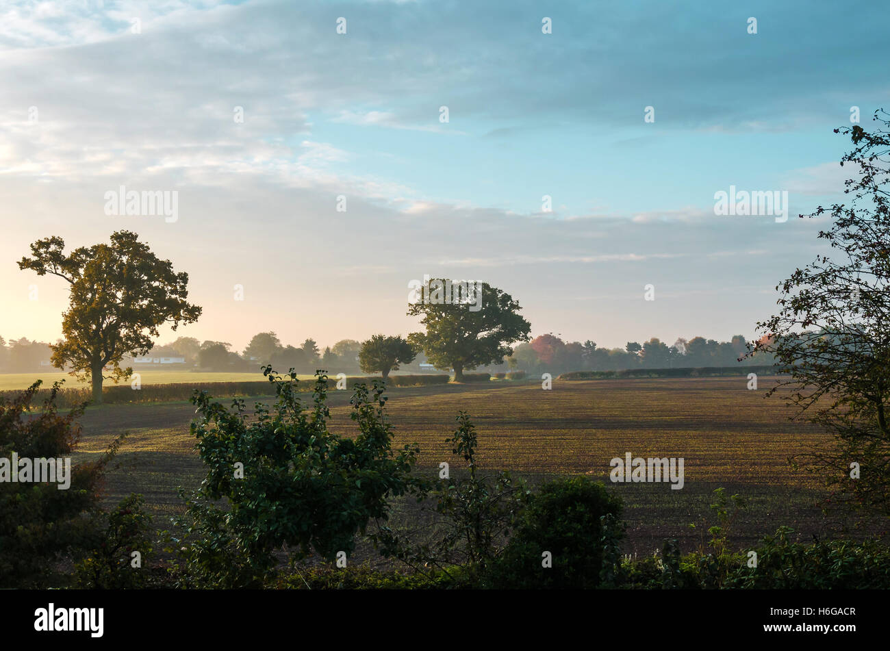 a-view-across-fields-and-hedgerows-on-a-hazy-autumn-morning-H6GACR.jpg