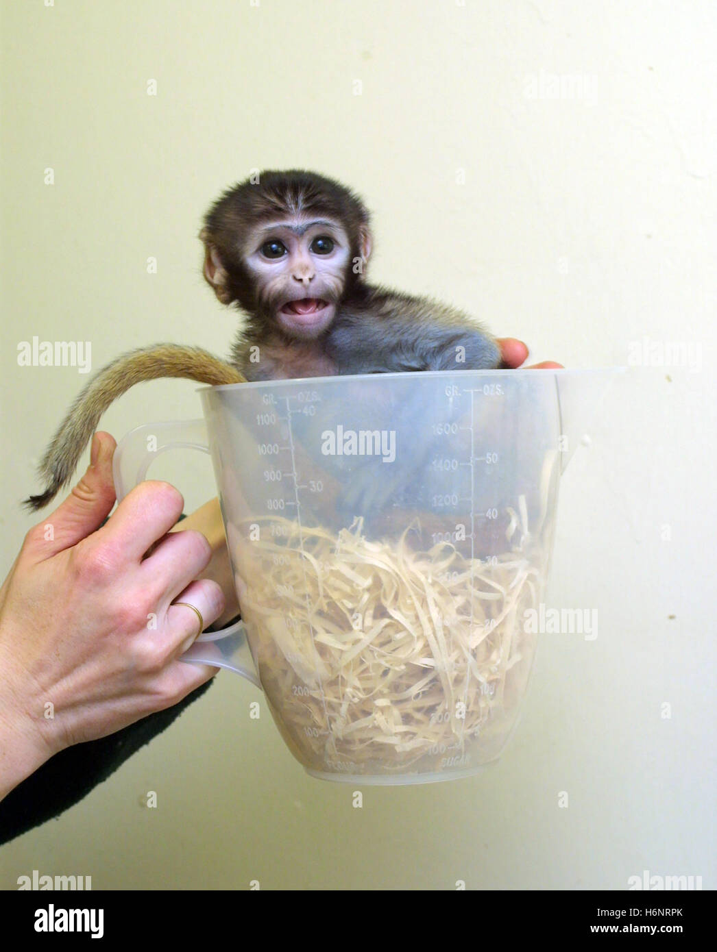 baby-patas-monkey-in-a-plastic-jug-H6NRP