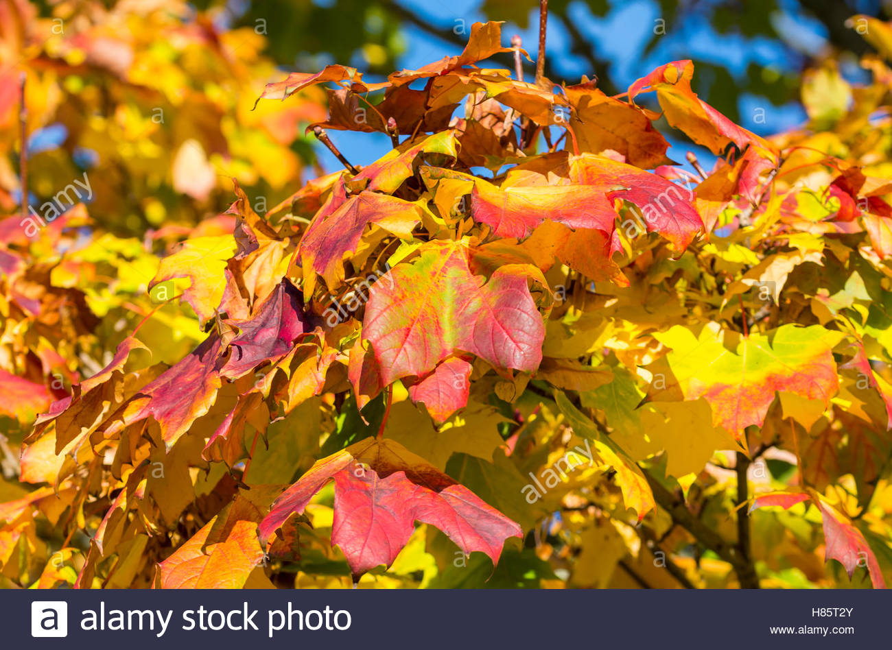 colourful-autumn-leaves-on-a-tree-in-the