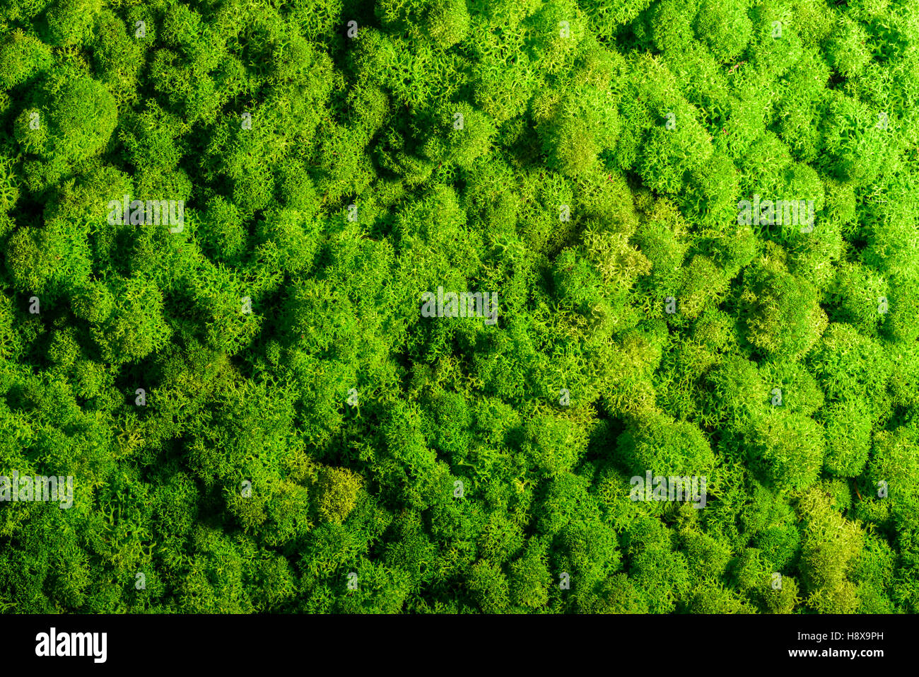 reindeer moss wall green wall decoration made of reindeer lichen stock photo royalty free. Black Bedroom Furniture Sets. Home Design Ideas