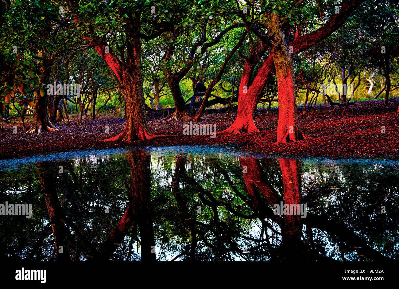a-grove-of-trees-at-sunset-keoladeo-ghan