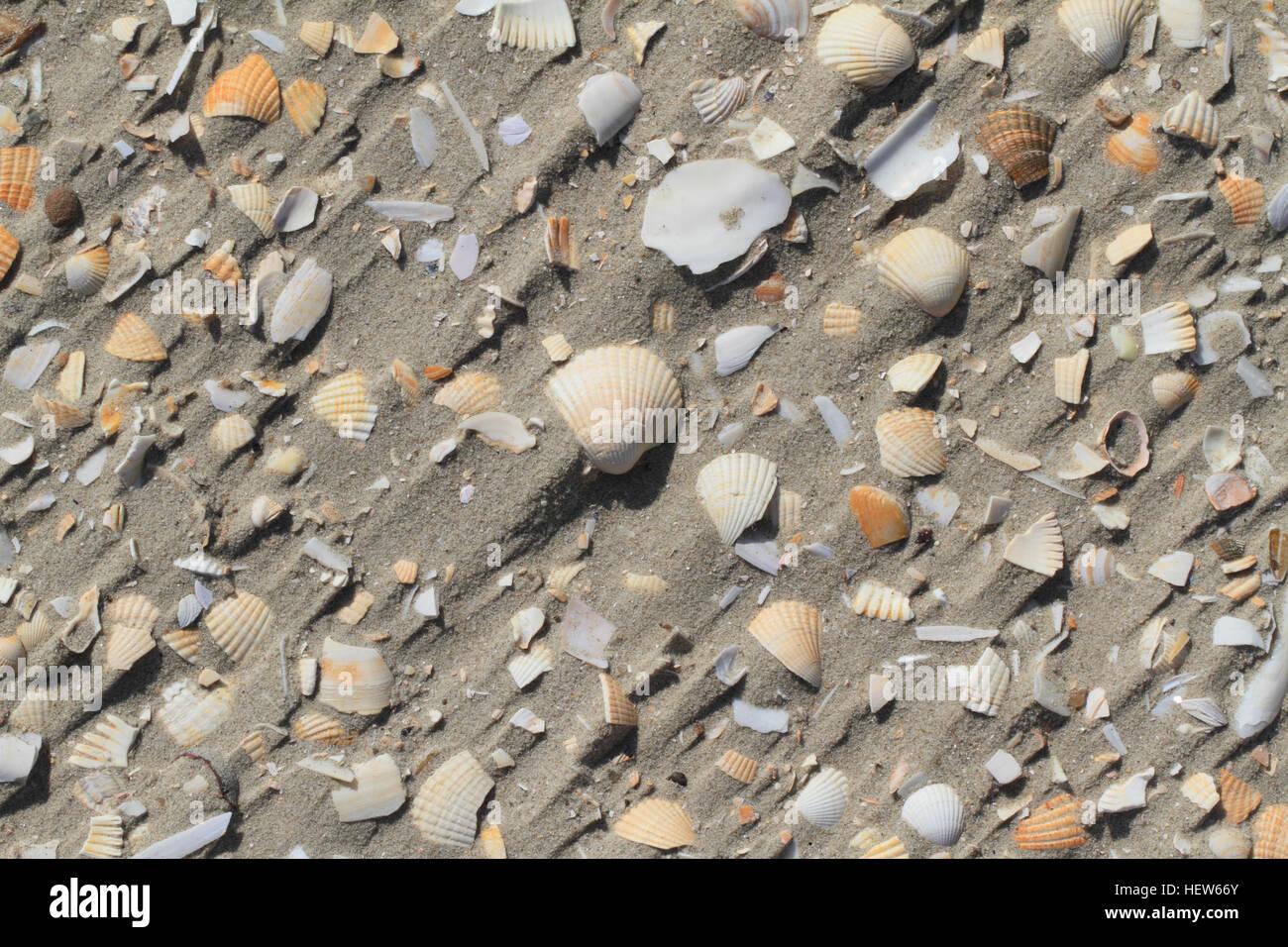 broken-sea-shells-mainly-common-cockle-c