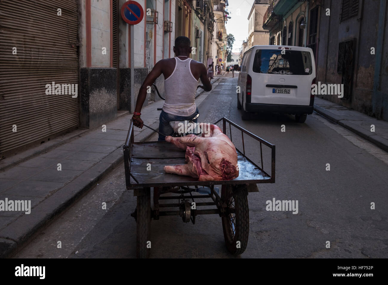 bike-and-trailer-with-carcass-of-a-pig-o