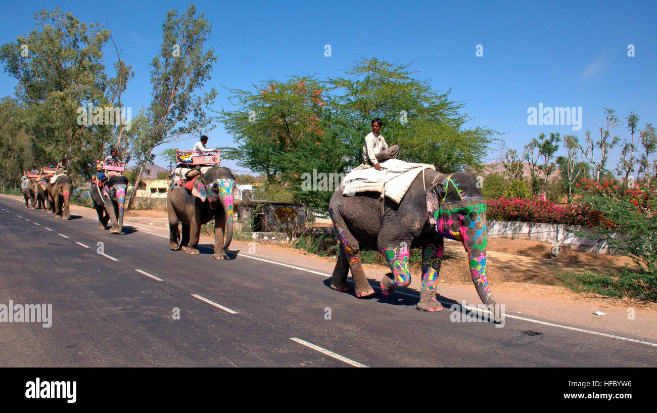 caparisoned-elephants-on-a-road-in-jaipu