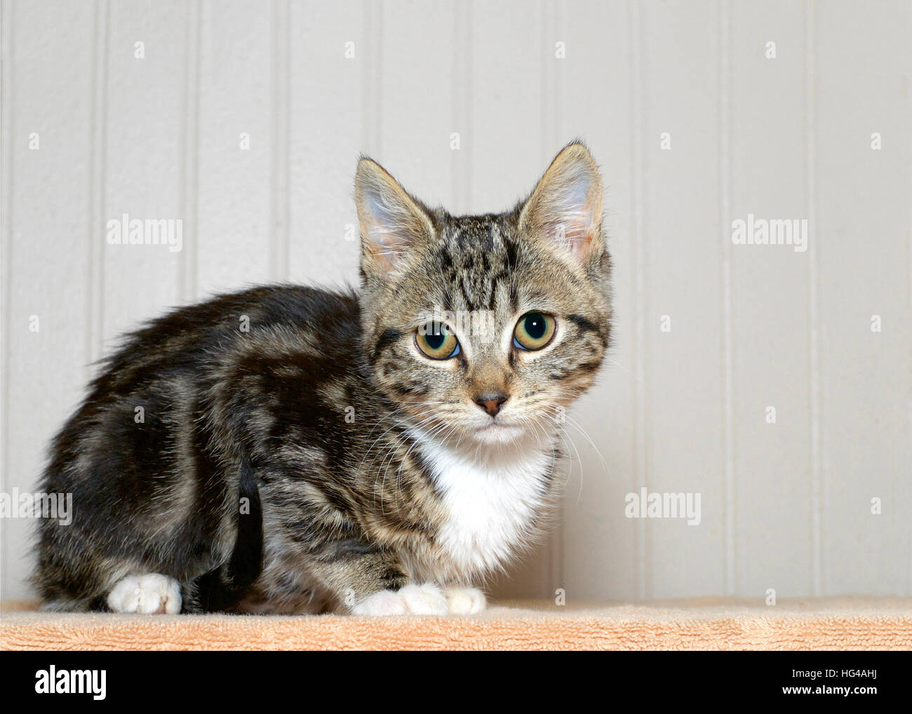 Gray Striped Cat With White Paws