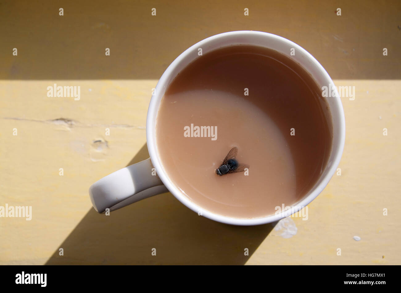 Fly in a cup of tea Stock Photo
