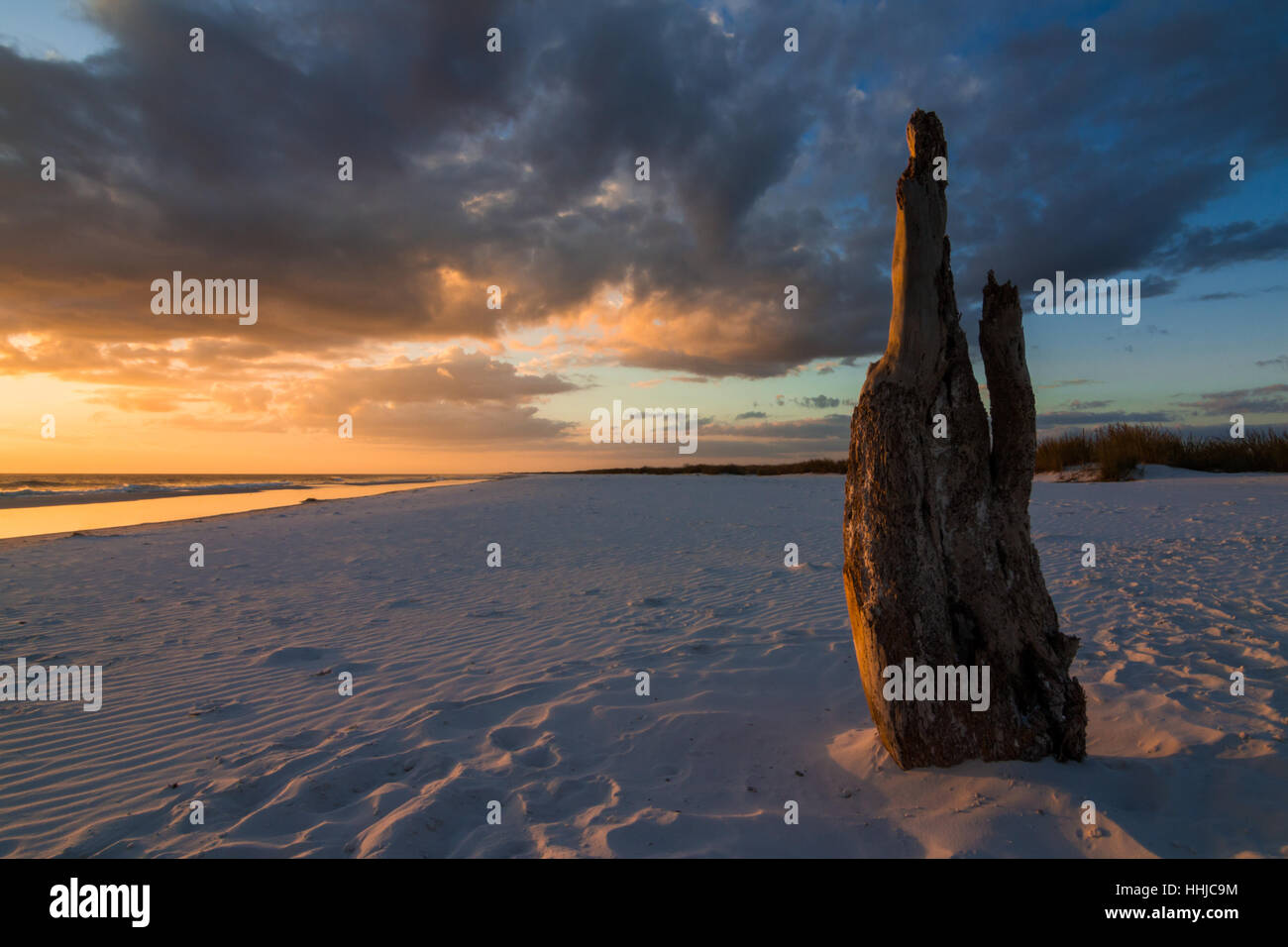 A piece of driftwood with personality is lit by a beautiful sunset over a beautiful white Florida Gulf coast beach Stock Photo