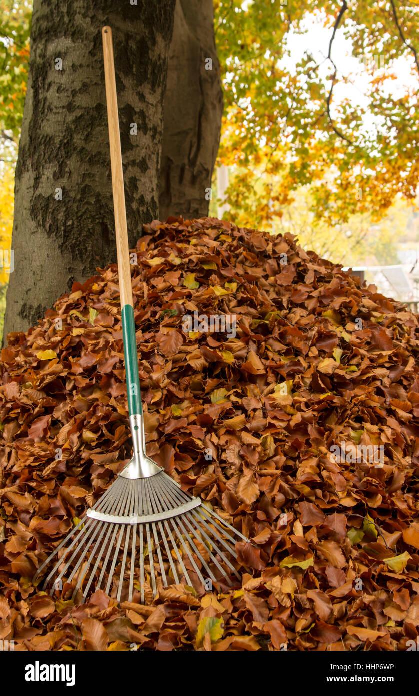 tree trees leaves season indian summer broom sweep orange stock photo royalty free image. Black Bedroom Furniture Sets. Home Design Ideas