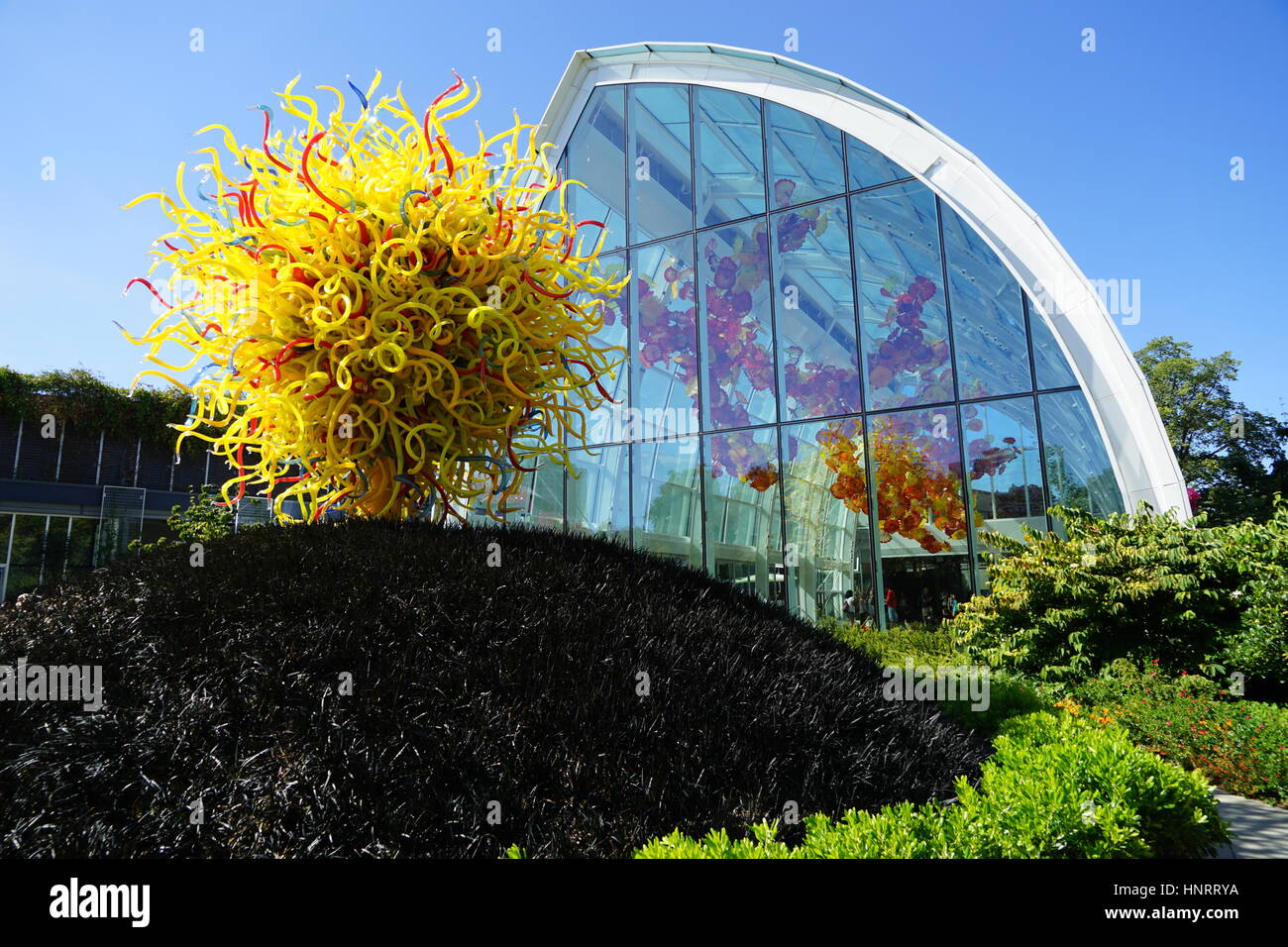 View of 'The Sun' sculpture at Chihuly Garden and Glass, on a bed of black mondo grass and is an explosion of yellow Stock Photo