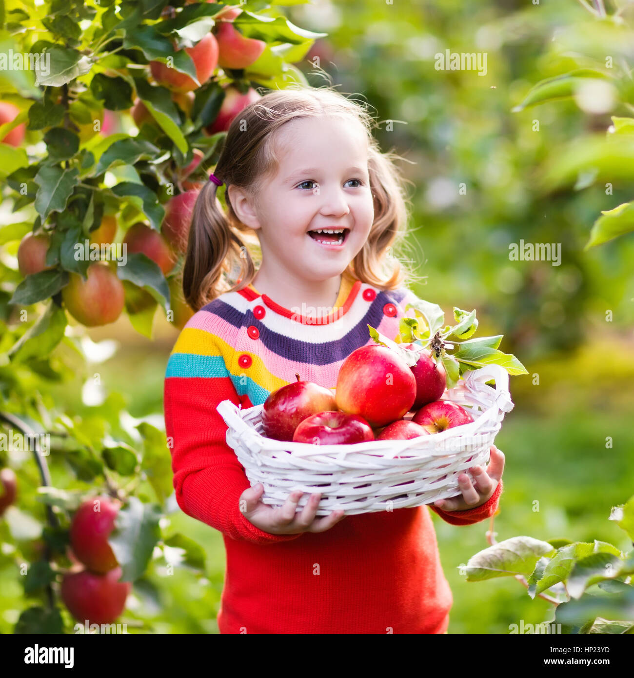 Child Picking Apples On A Farm In Autumn Little Girl
