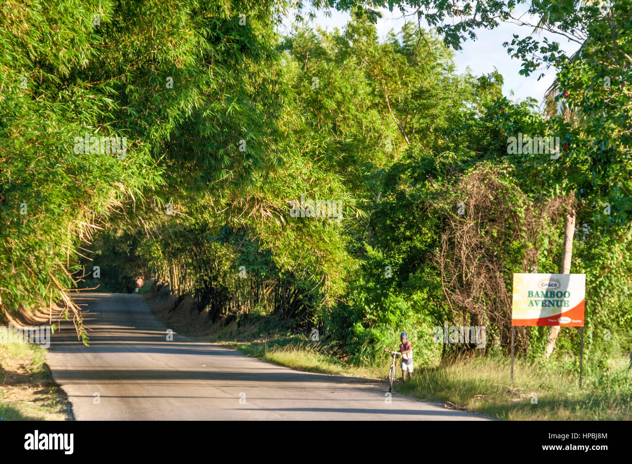 Jamaica St Elisabeth Bamboo Avenue 2 1 2 miles long Bamboo trees overgrowing the road like a tunnel Stock Photo