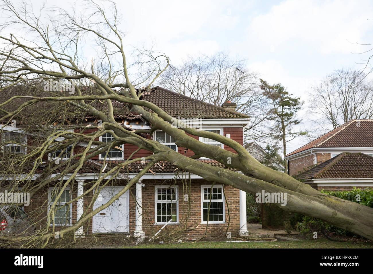maidenhead-uk-23rd-feb-2017-a-large-tree