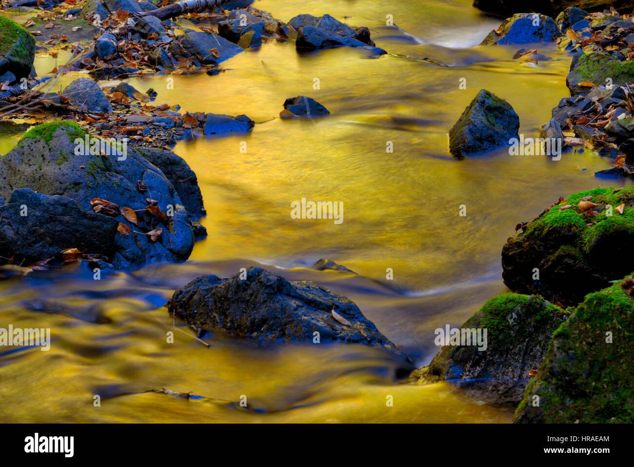 intense-golden-autumn-light-reflected-in-water-in-a-stream-in-gaspesie-HRAEAM.jpg
