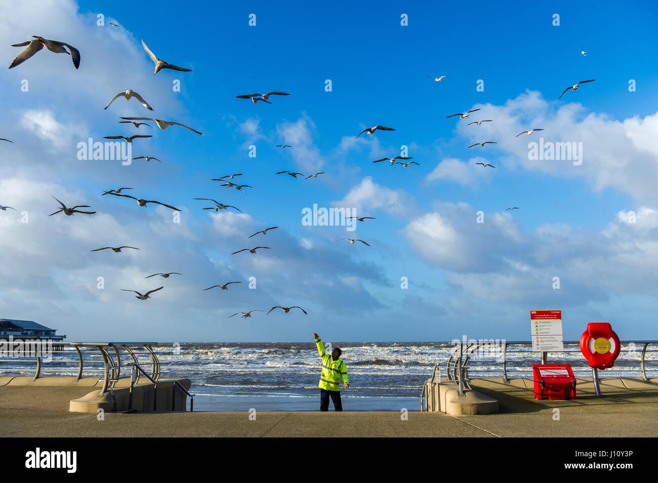 seagulls-in-blackpool-united-kingdom-bei