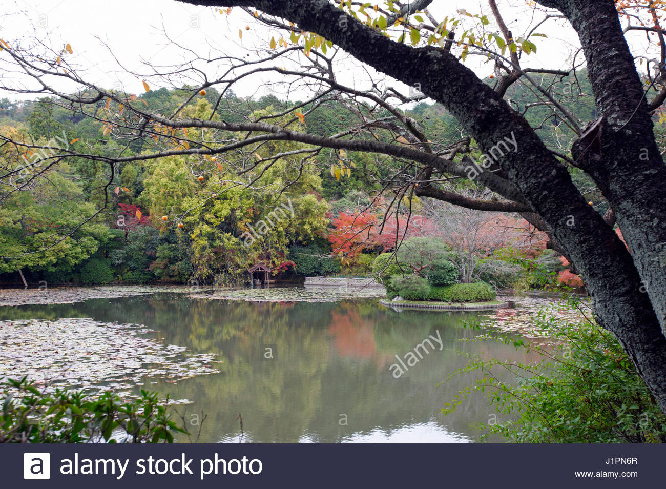 Ryoanji temple garden kyoyochi pond kyoto japan stock for Your pond japan