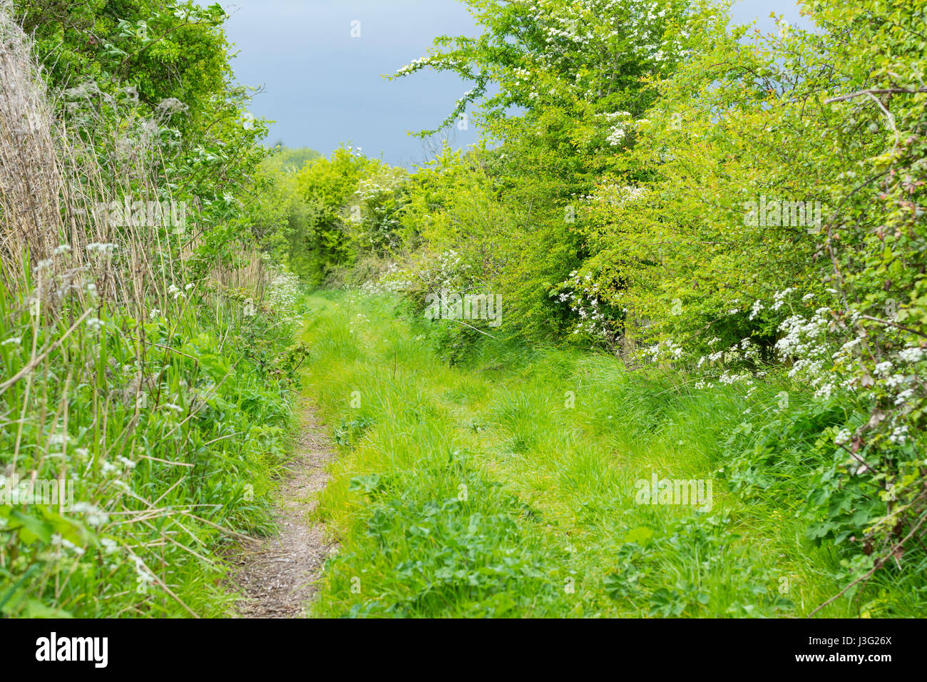 overgrown-narrow-country-path-in-spring-