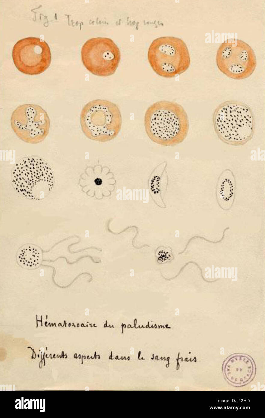 Laveran Malaria drawings Stock Photo