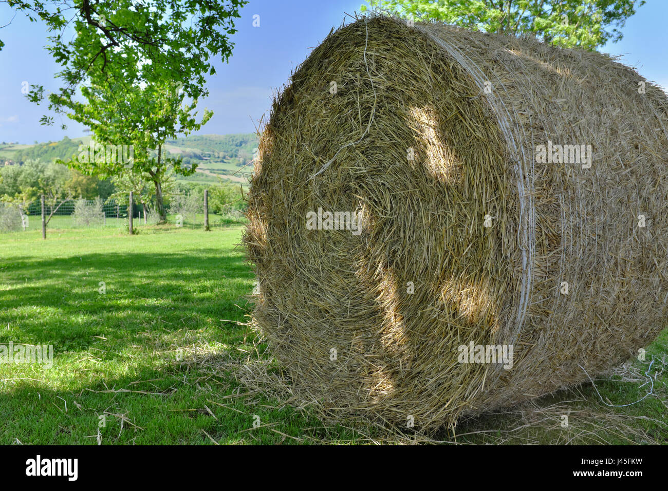 round-hay-bale-in-spring-enclosed-field-