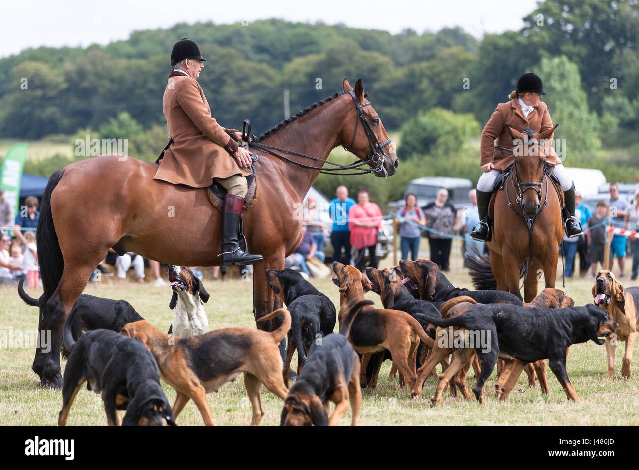 horse-and-hounds-at-the-rye-country-show