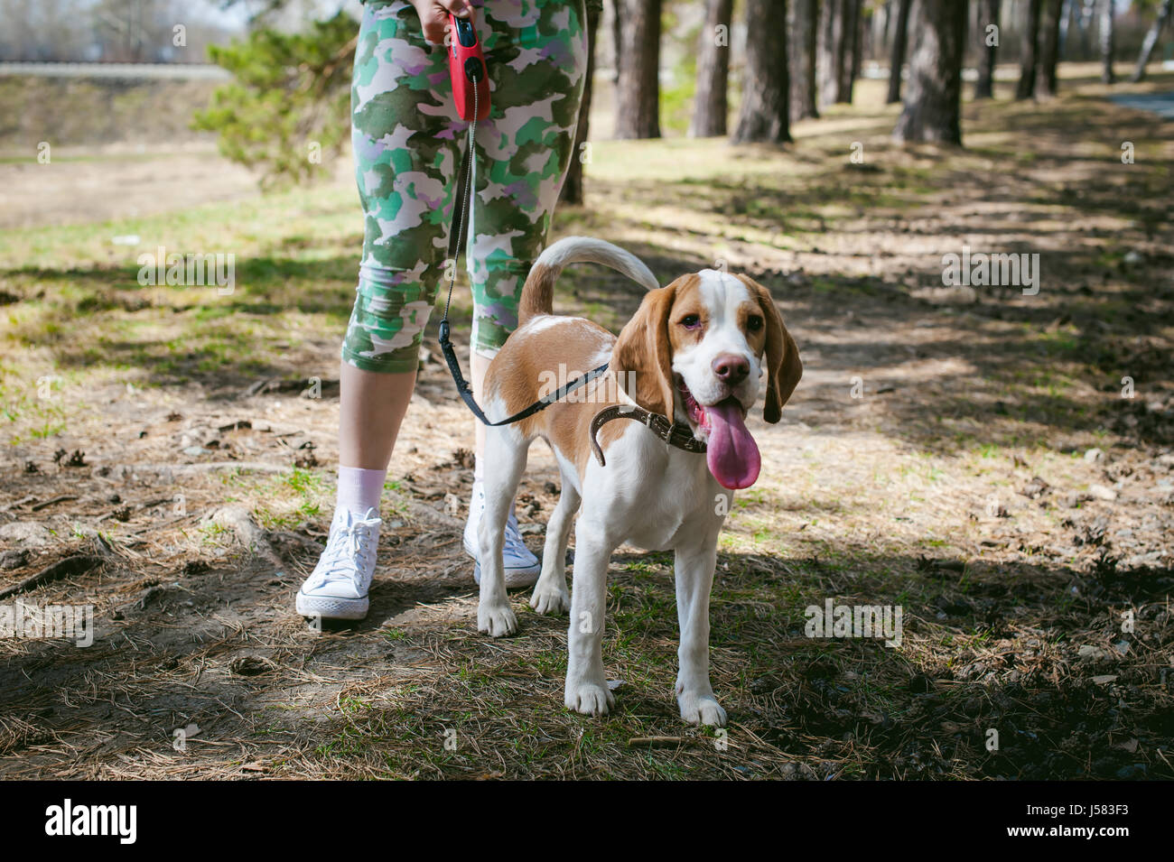 how to walk a puppy with an older dog