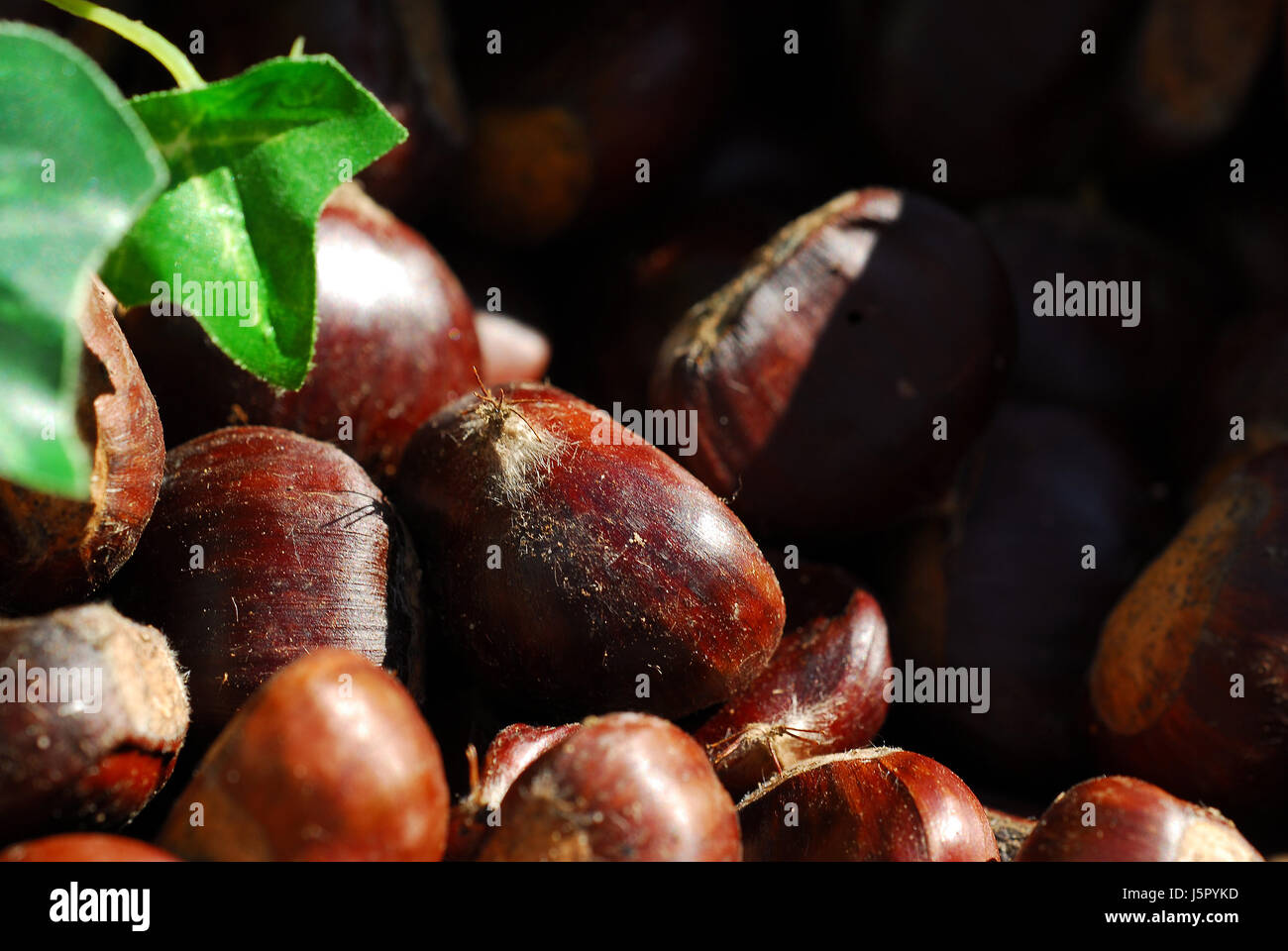 delicacy chestnut edible oxidized rust roast roasted parched esskastanie - Stock Image