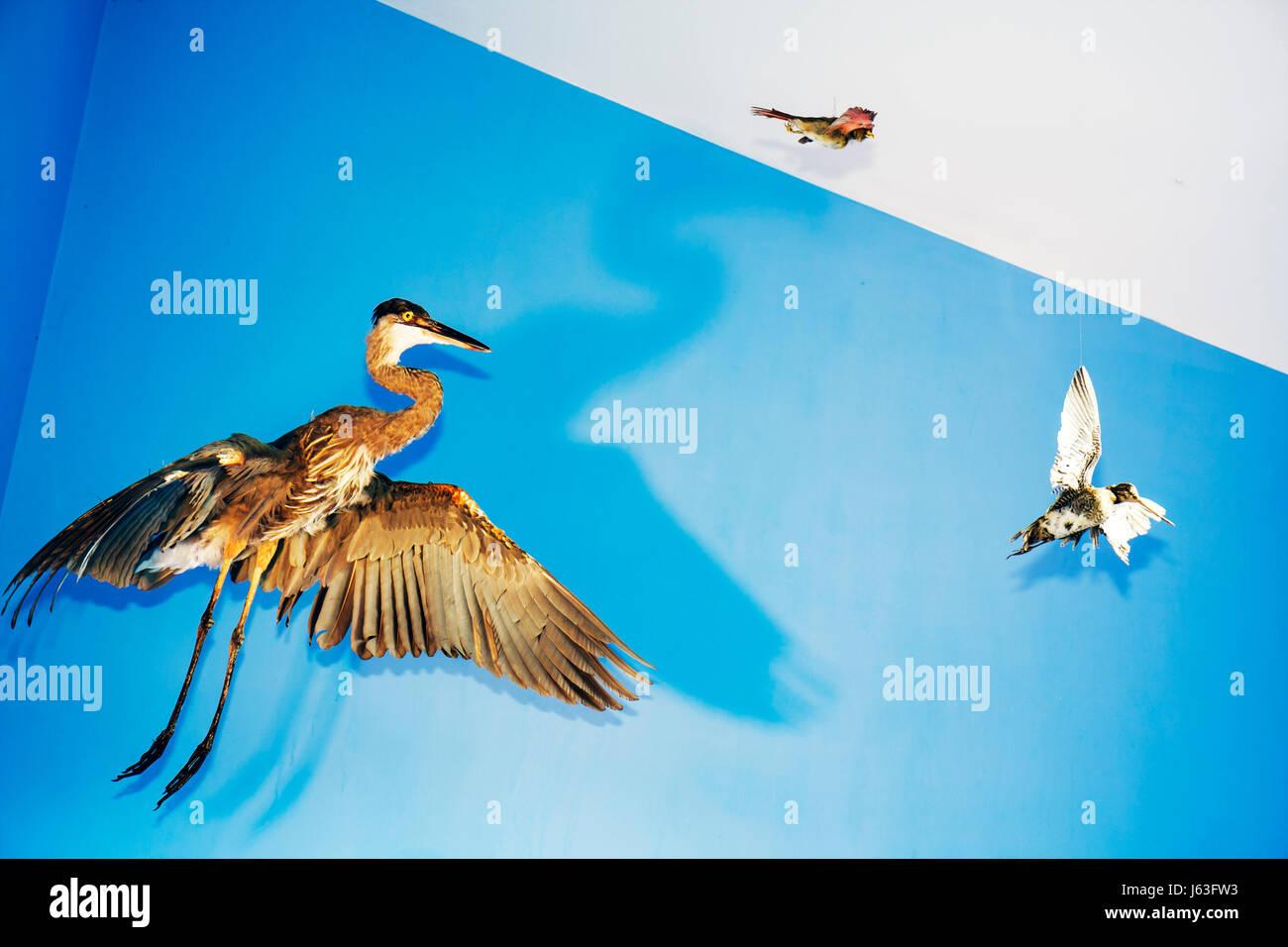 Indiana Chesterton Indiana Dunes State Park Nature Center bird species local fauna wildlife exhibit taxidermy - Stock Image