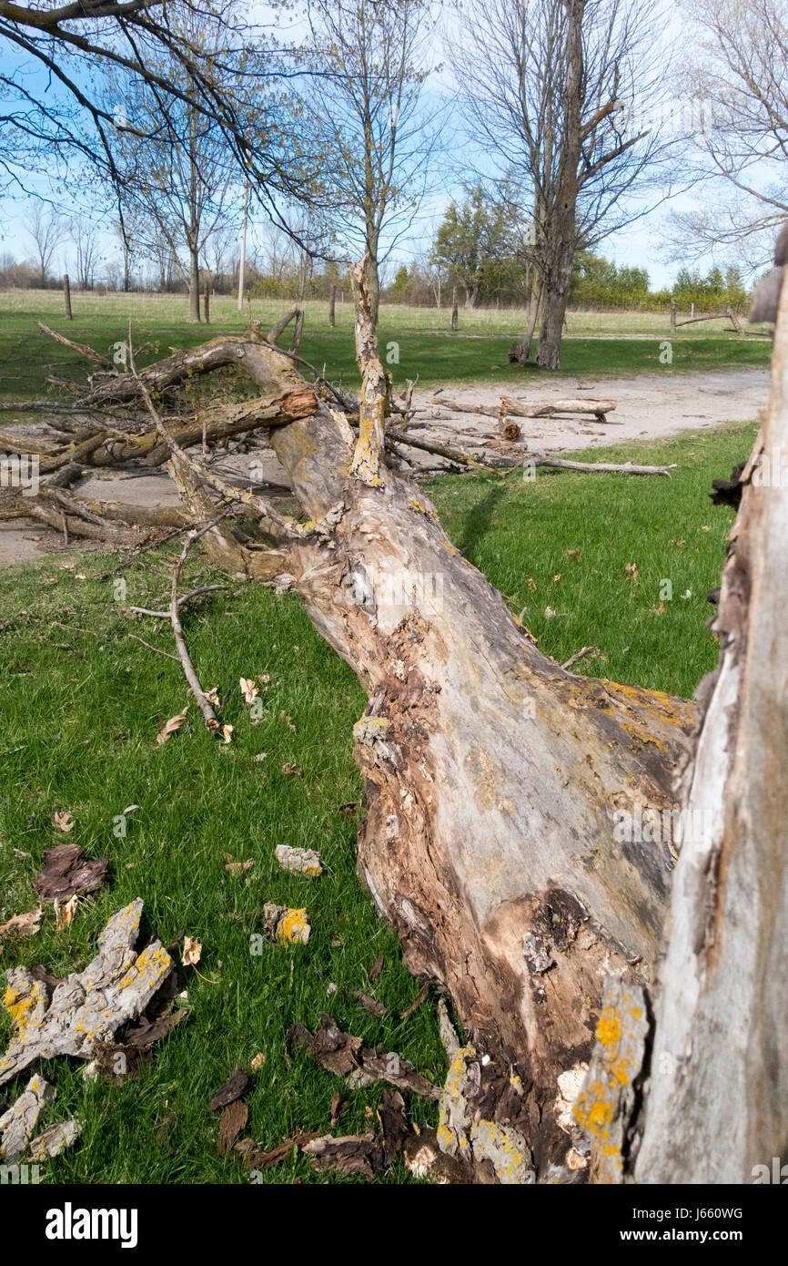 view-of-walnut-tree-trunk-across-farm-dr