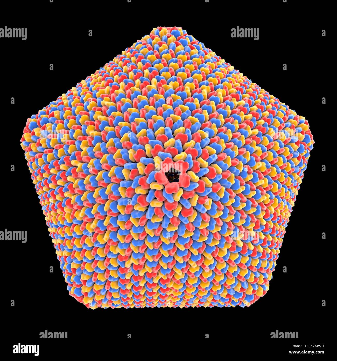 Computer artwork of an icosahedral virus capsid, derived from protein data of a minivirus, a huge icosahedral virus - Stock-Bilder