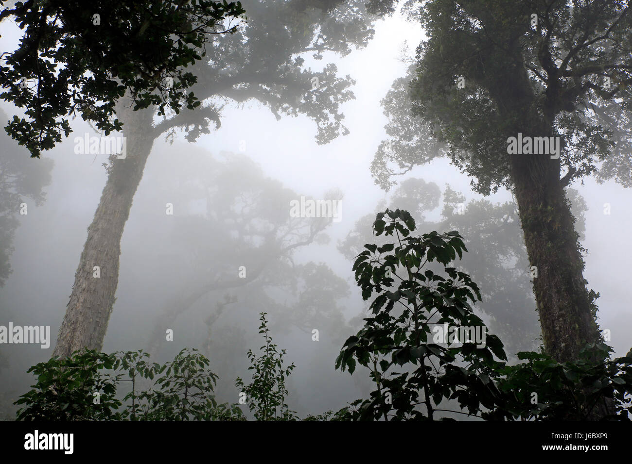 Cloud Forest of Boquete, Panama - Stock Image