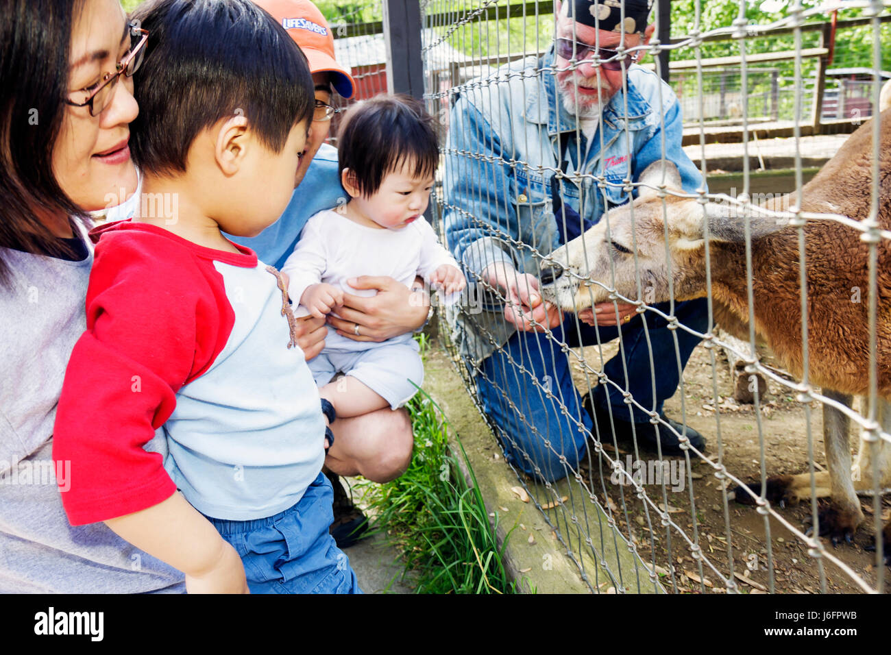 Tennessee Sevierville Smoky Mountain Deer Farm and Exotic Petting Zoo kangaroo Asian man woman boy girl baby family - Stock Image