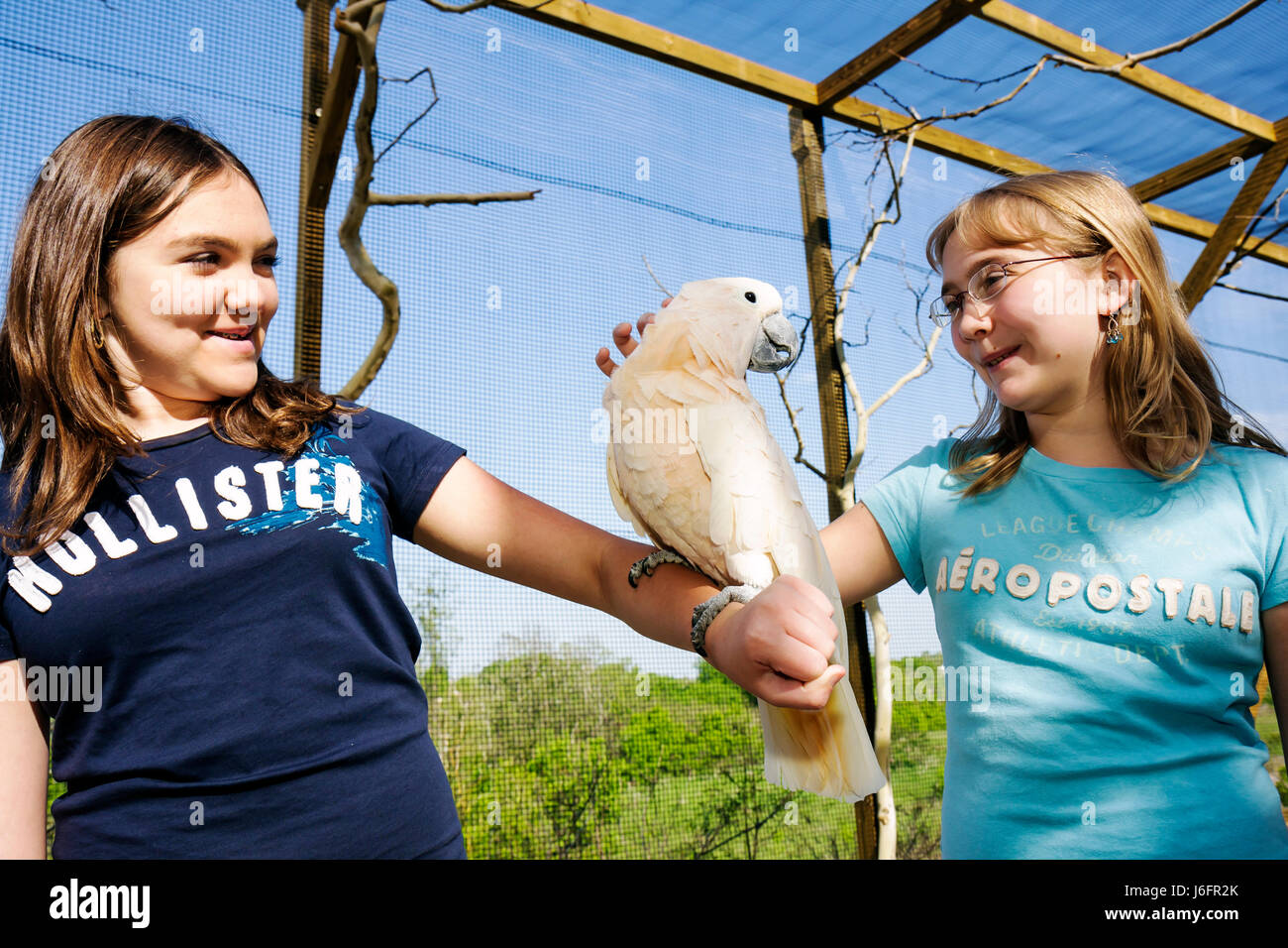 Tennessee Sevierville Rainforest AdventuresTropical Discovery Zoo outdoor cage aviary cockatoo teen girls - Stock Image
