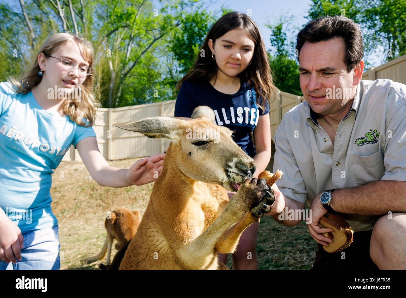Tennessee Sevierville Rainforest AdventuresTropical Discovery Zoo kangaroo teen girls sisters father trainer feeding - Stock Image