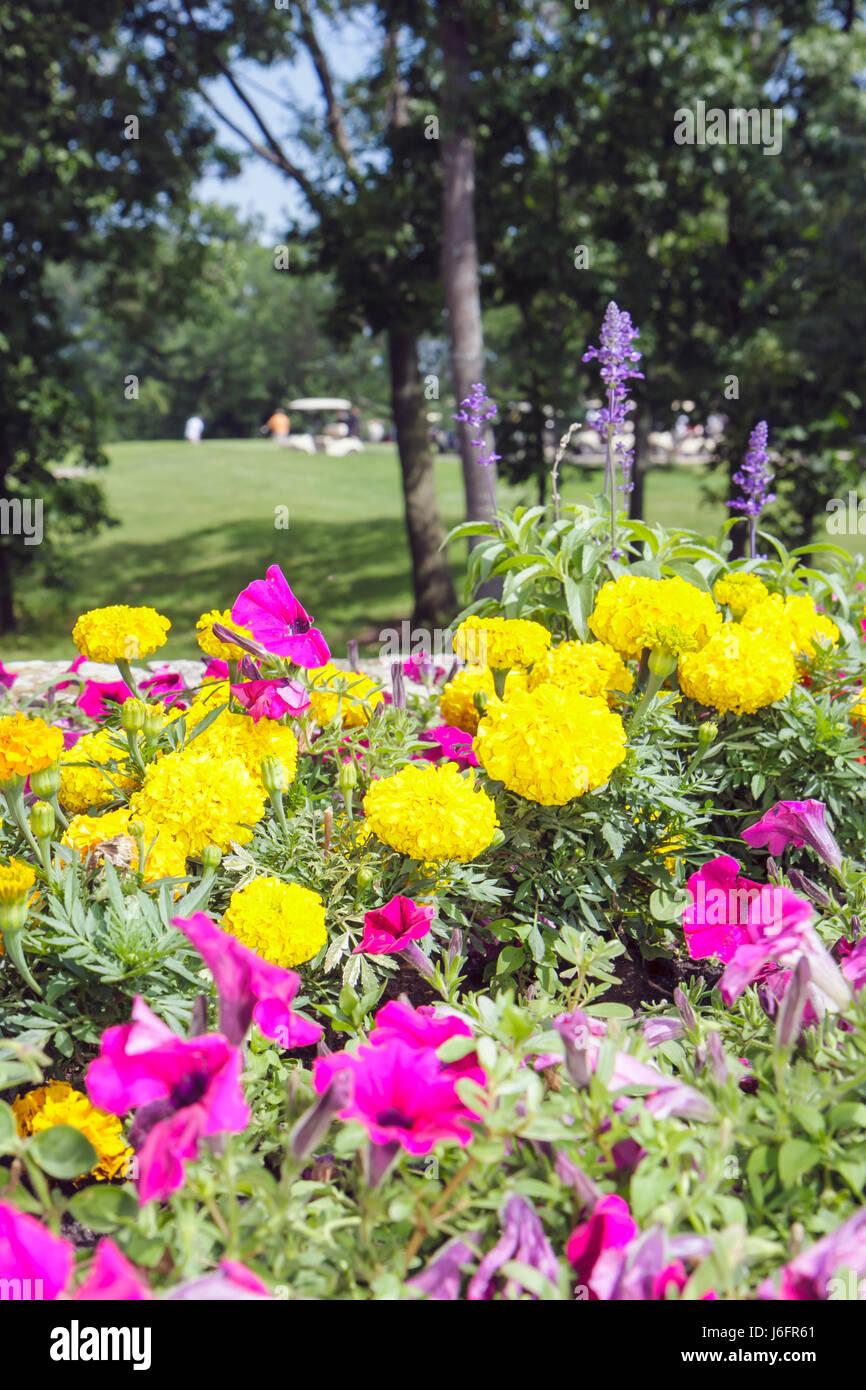 Wisconsin Kenosha Kansasville Brighton Dale Links golf course county park system garden yellow magenta flowers scenic - Stock Image